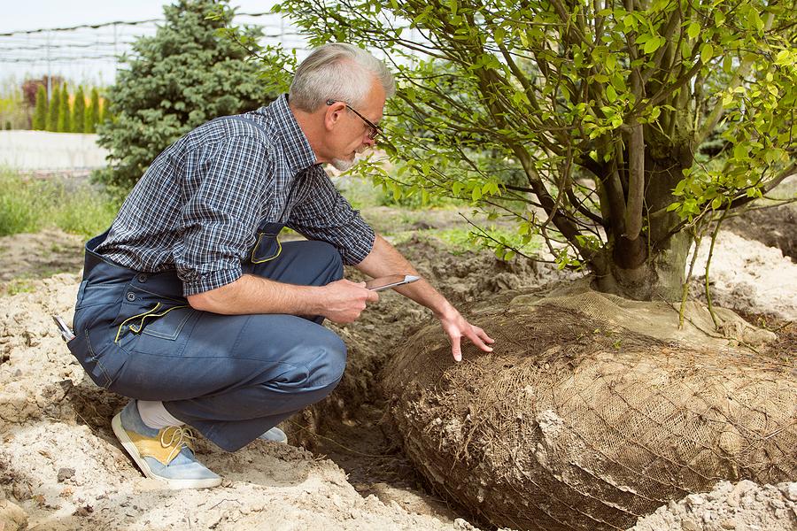 Arborist doing a tree inventory service